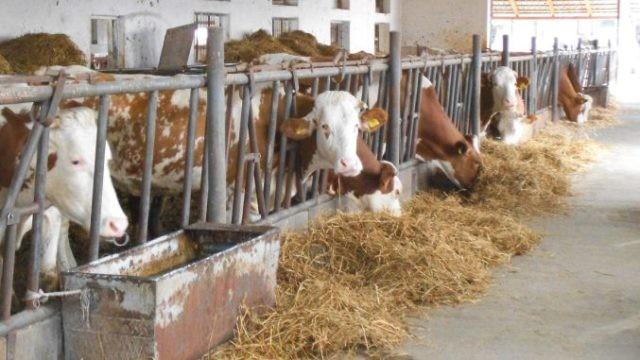 Crescătorii de animale au termen până pe 31 martie la ajutorul de 300.000 euro/fermă