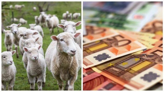 Subvențiile APIA care nu se vor modifica în următorii doi ani pe hectar și animale!