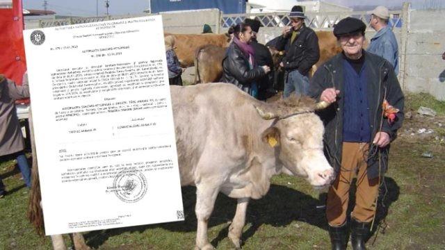 Újra megnyílnak az állatvásárok! Hivatalos irat az élő állatok kereskedelmének a piaci újraindításáról!