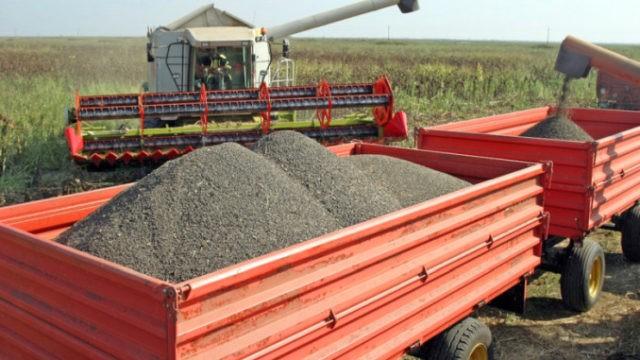 A napraforgó ára 2021-ben. A keleti gazdák tonnánként több mint 2.000 lejről tárgyalnak